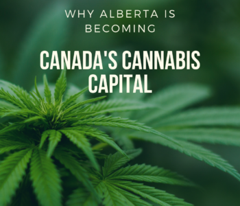 Why Alberta is Becoming Canada's Cannabis Capital